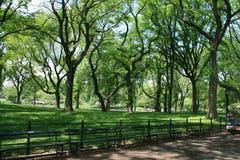 Bochtige bomen in het Central Park van New York royalty-vrije stock foto's