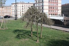 bochtige bomen op de waterkant royalty-vrije stock fotografie