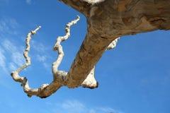 Bochtige knoestige boomtakken Stock Foto
