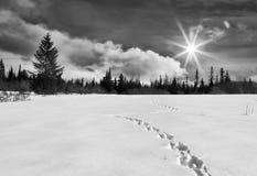De bochtige Weg van de Winter royalty-vrije stock afbeelding