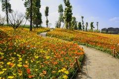 Bochtige weg op het bloeiende gebied van de graanpapaver op helling van zonnig royalty-vrije stock foto