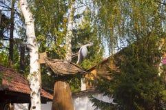 Bociana gniazdeczko Zdjęcie Royalty Free