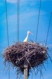 Bocianowa pozycja Dumnie na Gniazdowym stronę i Patrzeć zdjęcia stock