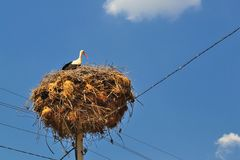 Bocianowy odpoczywać na gigantycznym gniazdeczku budował na górze elektrycznej poczta Zdjęcia Royalty Free