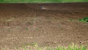 Bociany foraging w zaoranym polu Obrazy Royalty Free