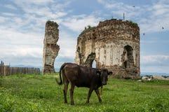 Bociulesti ruins Stock Photo