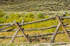 Bock- och stångstaket i landsbygd Arkivbilder