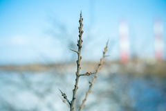 Bock-tagg filial med knoppar på en bakgrund av floden Arkivbild