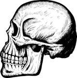 boczna czaszka royalty ilustracja