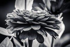 Bocznego widoku kwiat Zdjęcia Royalty Free
