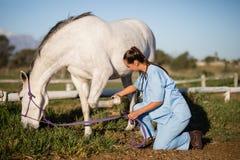 Boczny widok egzamininuje końską stopę żeński weterynarz Zdjęcie Royalty Free