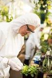 Boczny widok egzamininuje puszkującej rośliny żeński naukowiec Zdjęcie Stock