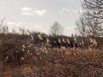 boczny widok pole traw płochy w światło słoneczne wiośnie Obrazy Royalty Free