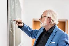 boczny widok popielaty włosiany profesor koryguje coś obraz royalty free
