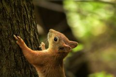 Boczny widok wiewiórka Obraz Stock