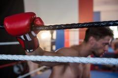 Boczny widok zmęczona męska boksera mienia arkana Obrazy Royalty Free