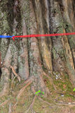 Bod hi tree tied with red cloth. Stock Photos