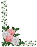 Boda blanca del color de rosa de la frontera de las rosas Imagenes de archivo