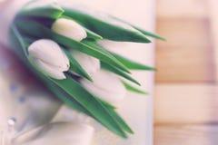 Boda blanca del cordón del tulipán Imagen de archivo