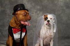 Boda del día de perro fotografía de archivo
