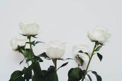 Boda, un ramo modesto de rosas blancas para la oferta de las manos y corazones de una muchacha en un fondo blanco imagen de archivo