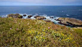 Bodega Bay View With Ice Plant stock photography