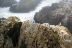 Bodega-Bucht lizenzfreie stockfotografie