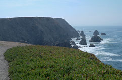 Bodega Head Horizons and Groundcover Royalty Free Stock Photo