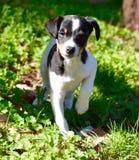 Bodega-Hund, Spanien Lizenzfreie Stockbilder