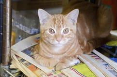 Bodega-Katze Lizenzfreies Stockfoto