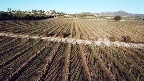 Bodegas De Santo Tomas, ferme de Santos de vignoble près d'Ensenada banque de vidéos
