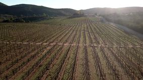 Bodegas de Santo Tomas, granja de Santos del viñedo cerca de Ensenada almacen de video