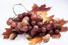 Bodegon del otoño Imagen de archivo libre de regalías