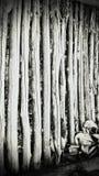 Bodem in Spookbungalow die in Wildernis wordt gevonden royalty-vrije stock foto's