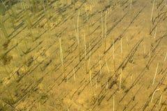 Bodem van meer of rivier met onderwaterfauna Stock Fotografie