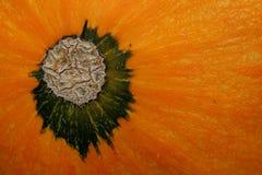 Bodem van pompoen (Cucurbita Pepo) textuur Royalty-vrije Stock Afbeeldingen