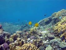 Bodem van tropische overzees met koraalrif en butterflyfishes stock afbeeldingen