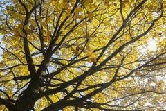 Bodemmening over Multicolored Bladeren op Autumn Trees in Stock Foto