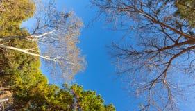 Bodemmening in treetops. Stock Afbeeldingen