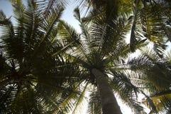 Bodemmening van groene bladeren op kokospalm royalty-vrije stock foto