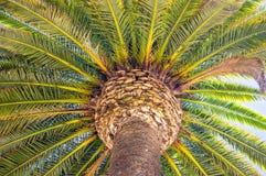 Bodemmening van palm tegen de blauwe hemel Stock Foto
