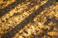 Boden eines Dünenwaldes mit Schatten lizenzfreie stockbilder