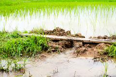 Boden für Reis Lizenzfreies Stockbild
