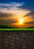 Boden mit Gras im Sonnenuntergang-Hintergrund Lizenzfreies Stockfoto