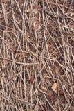 Boden mit trockenen kleinen Niederlassungen Stockbild