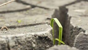 Boden und Gras während der Dürrensprünge Lizenzfreie Stockbilder