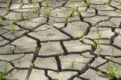 Boden und Gras während der Dürrensprünge Stockfotografie