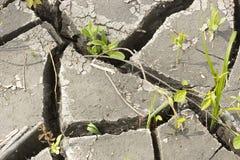 Boden und Gras während der Dürrensprünge Stockfoto