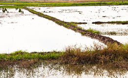 Bodenbearbeitung. Stockfoto