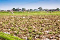 Bodenbearbeitung. Lizenzfreie Stockfotografie